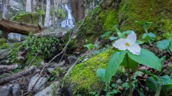 Trillium and Fern Branch Falls