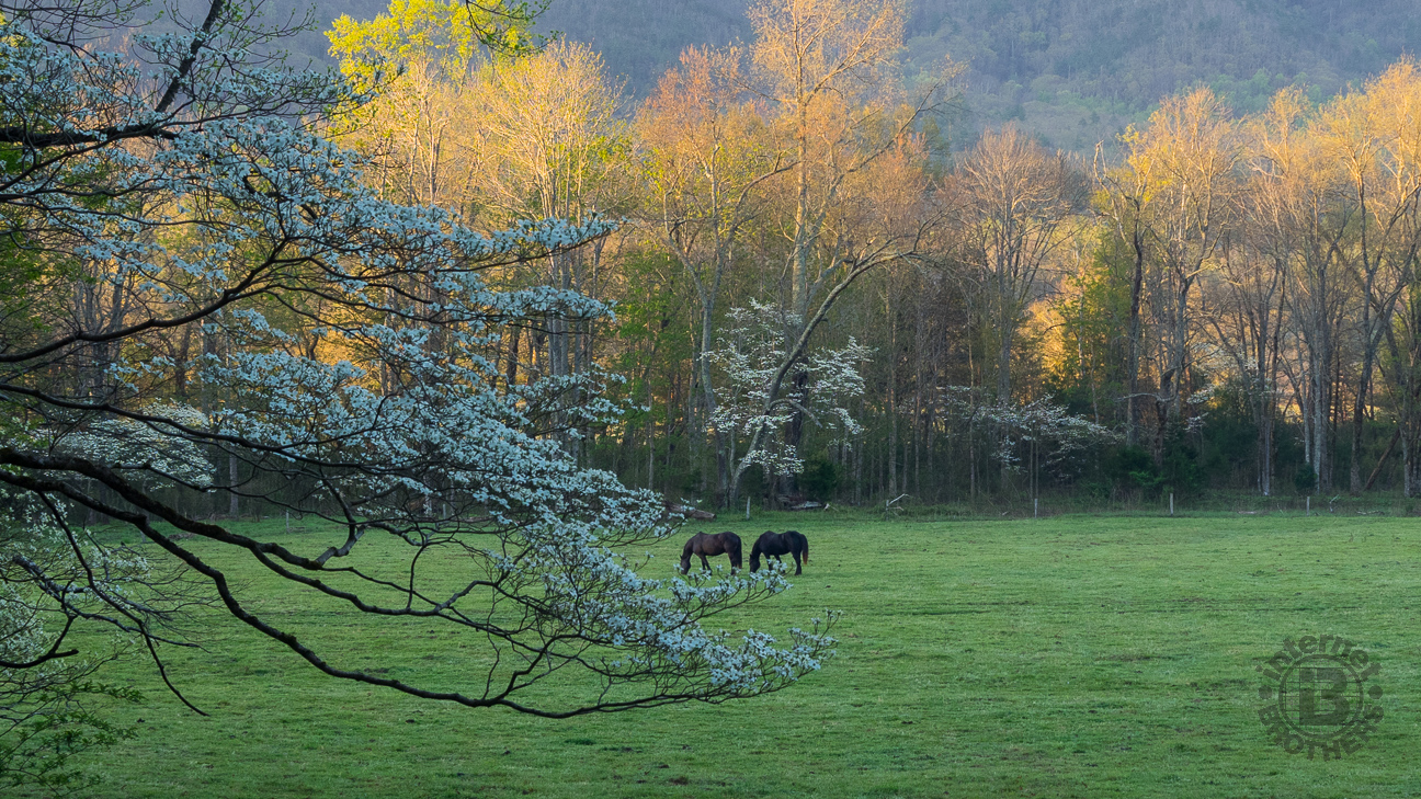 a visit to cades cove essay Nathan rose moved from cades cove to cherokee county,  according to the essay that i have his wife rachel died somewhere in tennessee  visit our other sites: .
