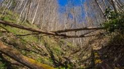 Fallen logs across the drainage