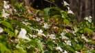 Trillium garden