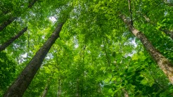 Healthy forest canopy