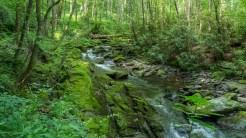 Mossy shale