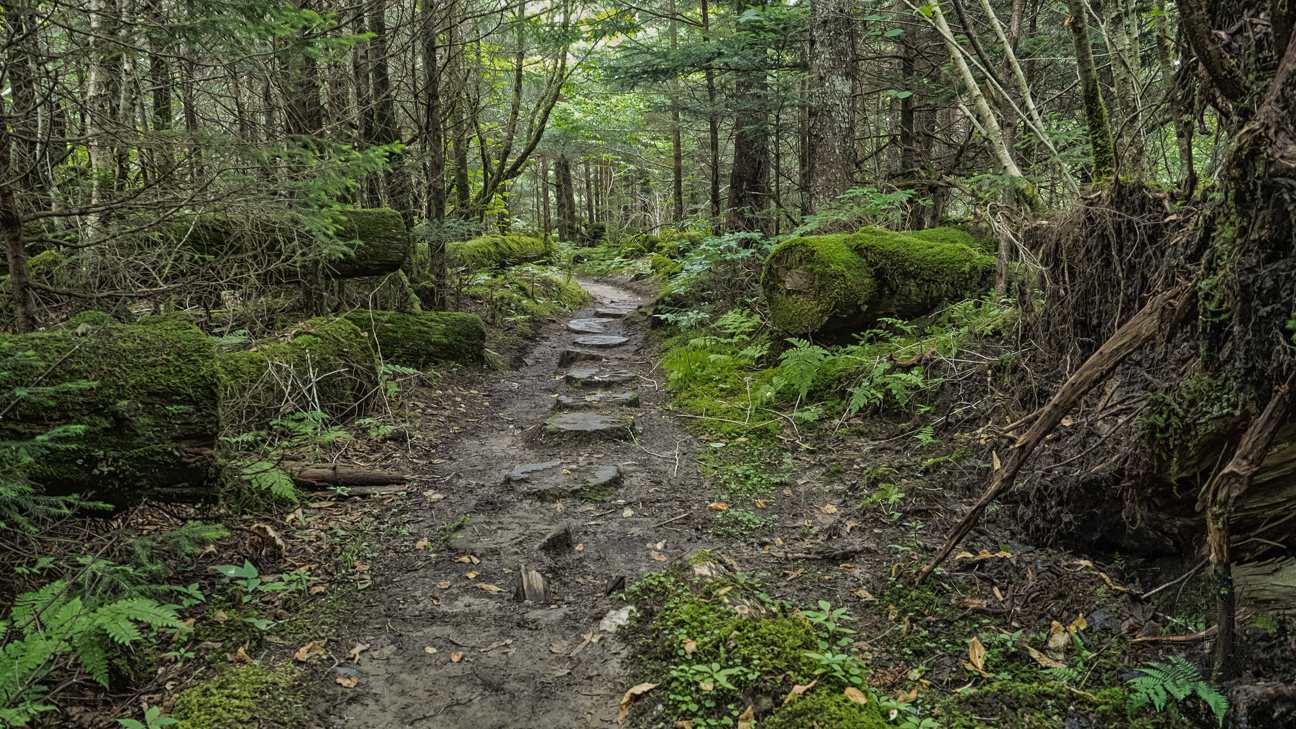 Meanderthals | Appalachian Trail from Clingmans Dome to ...
