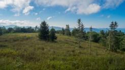 Earl's meadow