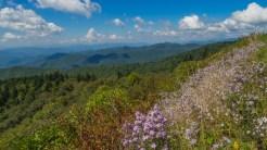 Flowery hillside on the BRP