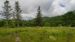 West from Earl's meadow