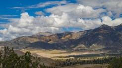 Aspen forest on the ridge