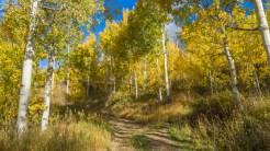 Spraddle Creek Trail