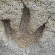 Fossils stolen from Death Valley National Park