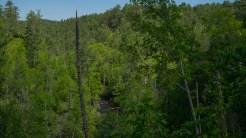 Abrams Creek from Arbutus Ridge