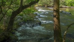 Abrams Creek shoals