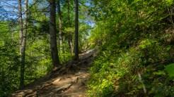 Climbing Arbutus Ridge