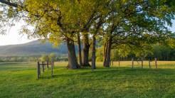 Cemetery before sunset