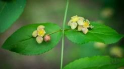 Flowering leaves