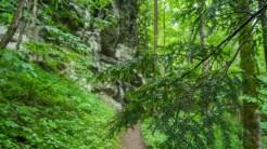 Hemlock and escarpment