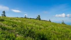 Climbing Grassy Ridge Bald