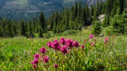 Wildflowers and evergreens