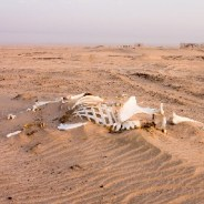 Climate change threatens uninhabitable conditions for the Middle East and North Africa