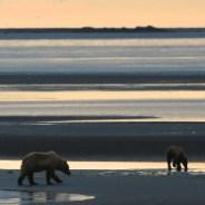 A Bear's-Eye view of the Katmai Coast