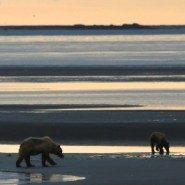 A Bear's-Eye view of the Katmai Coast