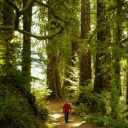 10 Amazing Day Hikes in Olympic National Park