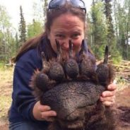 North Cascades grizzly bear recovery work halted by Interior Department