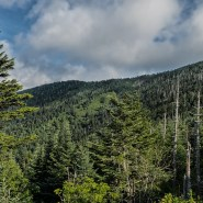 Deep freeze helps fight tree-killing insect in the Smokies