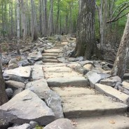 Rainbow Falls Trail Project Continues on Mt. LeConte