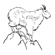 Removal of Olympic National Park mountain goats could start in late summer