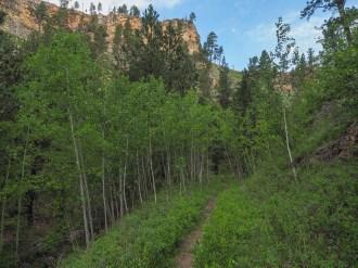 Post fire aspen forest