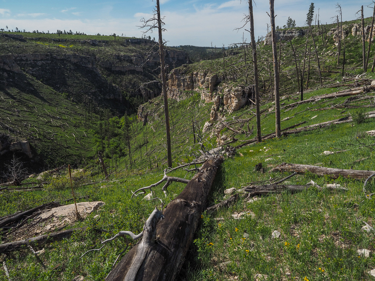 Meanderthals | Hell Canyon Trail, Black Hills National Forest  |Black Hills Trail Reports