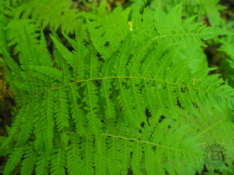 Fresh summer ferns