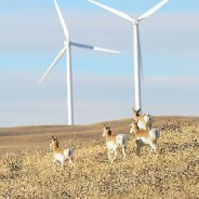 Wyoming, the country's top coal producer, is wrangling support for wind power