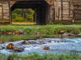 Cataloochee Creek