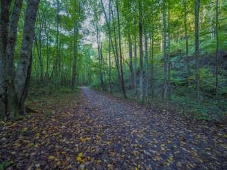 Rough Fork Trail