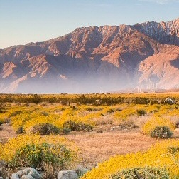 Ultimate guide to hiking Coachella's hidden canyons