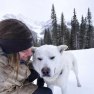 Alberta photographer takes shelter dogs on hikes to help them find forever homes