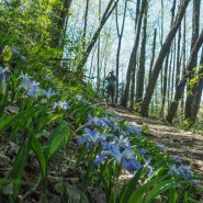 Eight colorful hikes to celebrate National Wildflower Week