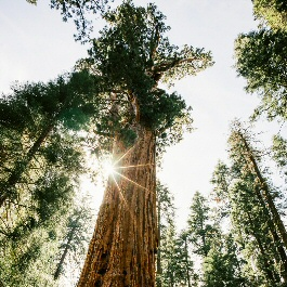 In fall, experience the awe and adventure in Sequoia and Kings Canyon national parks
