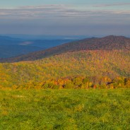 Strong leaf season predicted for WNC