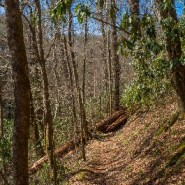 Hikers: Beware of Falling Trees