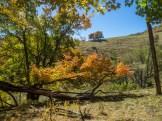 Open pasture at Cataloochee Ranch along the Cataloochee Divide Trail