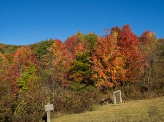 Color at the hitching post near Ferguson Cabin at Purchase Knob