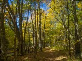 Cataloochee Divide Trail parallels The Swag resort property