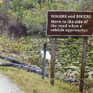 Gator bites Florida college student hiking in Everglades