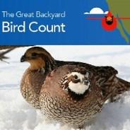 2020 Great Backyard Bird Count