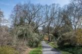 Walkway to Spring Garden