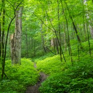 'Forest bathing' is path to peace