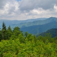 Smokies air quality 'noticeably clean' during pandemic