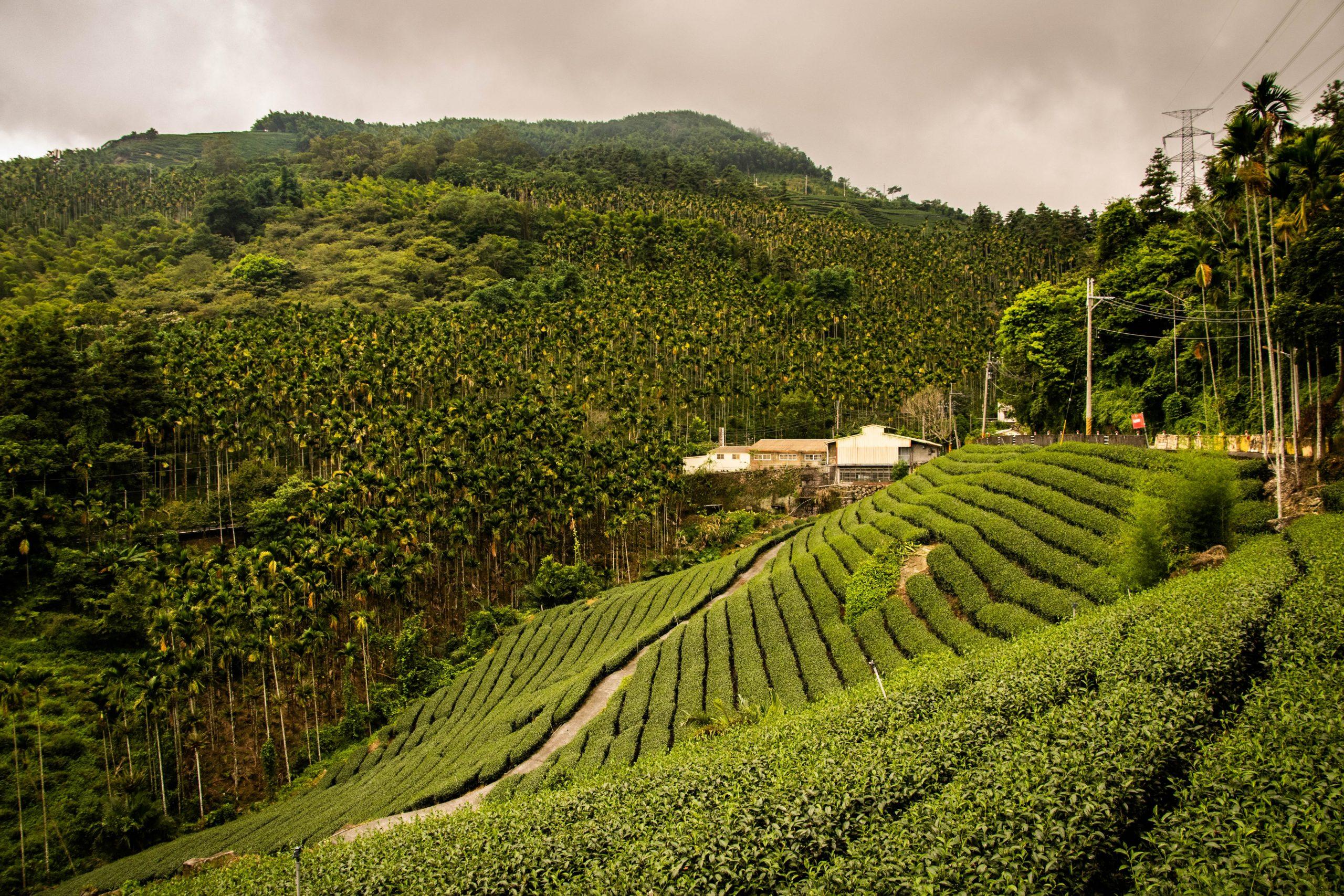 DAVIDsTEA-$DTEA-tea-industry-growth-internet-bull-report